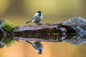paukščių stebėjimas